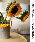 Yellow Sunflowers In A Gray Vase