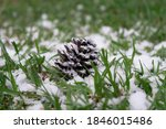 pine cones with snow falling on ... | Shutterstock . vector #1846015486