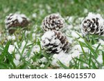 pine cones with snow falling on ... | Shutterstock . vector #1846015570