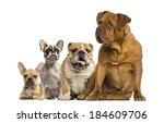 Dogue De Bordeaux And Bulldogs...