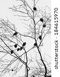 silhouettes of birds  black and ... | Shutterstock . vector #184615970