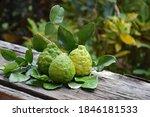 Raw And Ripe Citrus Hystrix Or...