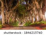 Tunnel Of Trees Road. Road...