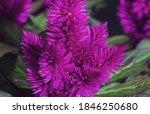 Feathery Lattice Flower On...