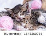 Two Striped Kittens Sleeping...
