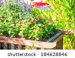 Beautiful Flower Pot In Garden...