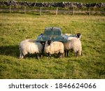 Sheep Feeding Along The Pennin...