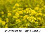 Closeup Of A Yellow Budding An...