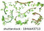 colorful liana or jungle plant... | Shutterstock .eps vector #1846643713
