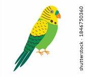 Budgerigar Green Parrot. Budgie ...