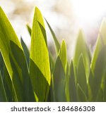 Macro closeup of some sunny blades of grass - stock photo