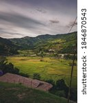Green Rice Fields In The...