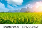 Green Rice Field And Mountain...
