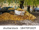 Autumn Leaf Cleaning In The...