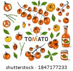 tomatoes. hand drawn tomatoes... | Shutterstock .eps vector #1847177233