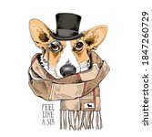 Portrait Of The Funny Corgi Dog ...