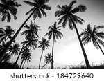 Black And White Photo Of Palm...