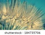 Blue Abstract Dandelion Flower...