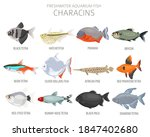 Characins Fish. Freshwater...