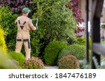 Professional Garden Worker in His 40s Trimming Decorative Trees Inside Large and Beautiful Mature Residential Garden. - stock photo