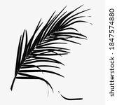tropical palm leaf  black...   Shutterstock .eps vector #1847574880