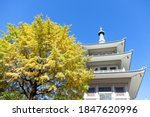 Autumn Tree With Blue Sky  And...