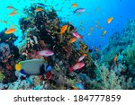 tropical coral reef red sea. | Shutterstock . vector #184777859
