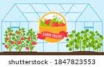 vegetables grow in farm...   Shutterstock .eps vector #1847823553