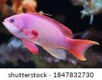 Salt Water Aquamarine Fish With ...