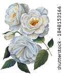 white flowers rose with leaves... | Shutterstock . vector #1848153166