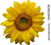 Isolated Yellow Sunflower On...