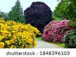 Colorful Flowering Bushes In...