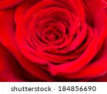 Red Roses As A Background. Macro