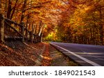 Autumn Forest Road. Road In...