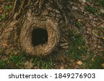 Tree Hollow In The Old Moss...