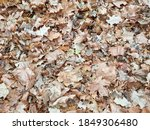 Dead Autumn Leaves On The...