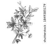 lilies flowers bouquet vintage... | Shutterstock .eps vector #1849385179