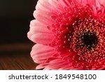Pink Gerbera Flower On A...