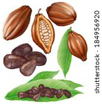 cocoa fruit  cut fruit  grains... | Shutterstock .eps vector #184956920