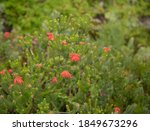 Autumn Flowering Red Flowers Of ...