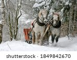 Horse carriage, sled on the snowy road
