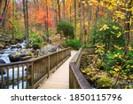 Bridge to anna ruby falls ...