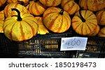 Yellow Striped Pumpkins  Gourds ...