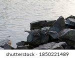 Large Boulders Lie On The Shore ...