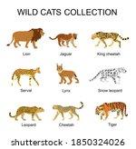 wild cats collection vector... | Shutterstock .eps vector #1850324026