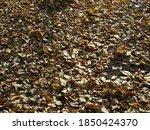 Autumnal Texture   Fallen...