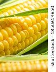 fresh sweet corn cobs.... | Shutterstock . vector #1850654650