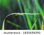 Beautiful Grasshopper On The...