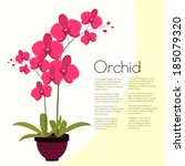 coloful pink orchid with leaves ... | Shutterstock .eps vector #185079320