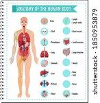anatomy of the human body... | Shutterstock .eps vector #1850953879